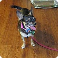 Adopt A Pet :: Nibbles - Scottsdale, AZ