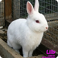 Other/Unknown Mix for adoption in Santa Maria, California - Lilly