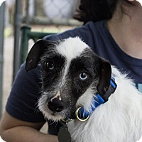 Adopt A Pet :: Cecil - Baton Rouge, LA
