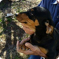Adopt A Pet :: JASPER - Lubbock, TX