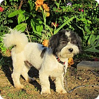 Adopt A Pet :: HOSS - Bedminster, NJ
