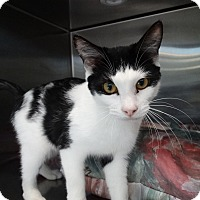 Adopt A Pet :: Starla - Elyria, OH