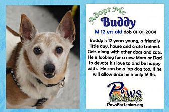 Jack Russell Terrier/Chihuahua Mix Dog for adoption in Bealeton, Virginia - Buddy