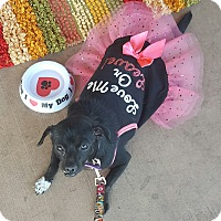 Chihuahua Mix Dog for adoption in Las Vegas, Nevada - Teeny