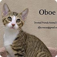 Adopt A Pet :: Oboe - Ortonville, MI