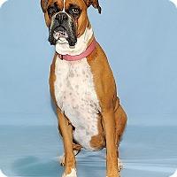 Adopt A Pet :: Stella - Gatineau, QC