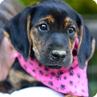 Adopt A Pet :: Lola - West Grove, PA