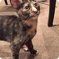 Adopt A Pet :: Lizzie - Frankfort, IL