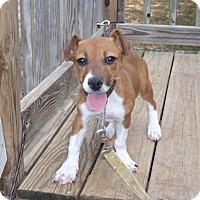 Adopt A Pet :: Sara - Manchester, NH