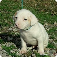 Adopt A Pet :: TITAN/ADOPTED - PRINCETON, KY