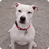 Adopt A Pet :: Carlee - Buena Vista, CO