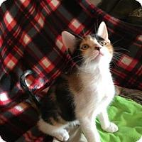 Adopt A Pet :: Paige - Hammond, LA