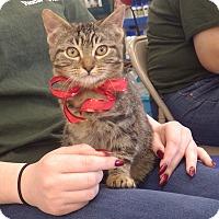 Adopt A Pet :: Trick - Quail Valley, CA