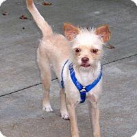 Adopt A Pet :: Peggy Sue - CONOVER, NC
