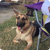 Adopt A Pet :: Tyson (Adoption pending) - Morrisville, NC