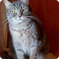 Adopt A Pet :: Marabelle $25 adoption - Monterey, VA