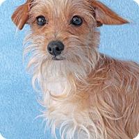 Adopt A Pet :: Vega - Encinitas, CA