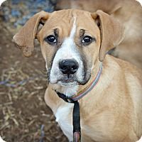 Adopt A Pet :: Doreen~adopted! - Glastonbury, CT