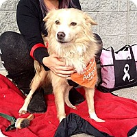 Adopt A Pet :: Rhoda - Trenton, NJ