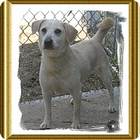 Adopt A Pet :: FRED - Metairie, LA
