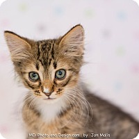 Adopt A Pet :: Dreamy - Fountain Hills, AZ