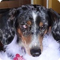 Adopt A Pet :: ISABELLA - Portland, OR