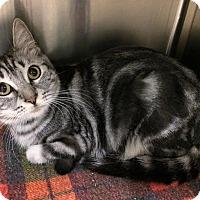 Adopt A Pet :: Swirl - Visalia, CA