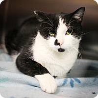 Adopt A Pet :: Kimmy - Appleton, WI