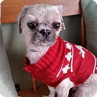 Adopt A Pet :: Jackson - Rochester, NY