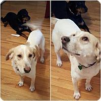 Adopt A Pet :: Jordan - Rexford, NY
