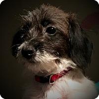 Adopt A Pet :: Oreo & Cookie (Th) - Tampa, FL