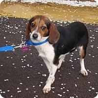 Adopt A Pet :: Lucy - Dumfries, VA