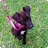 Adopt A Pet :: Phoebe - Beaumont, TX