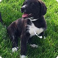 Adopt A Pet :: Jill - Oswego, IL