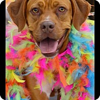 Adopt A Pet :: Delilah - Albemarle, NC