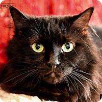 Adopt A Pet :: Priya aka Poe - St Paul, MN