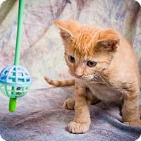Adopt A Pet :: SKEEMER - Anna, IL