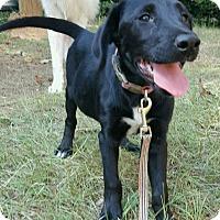 Adopt A Pet :: Starr - Gainesville, GA