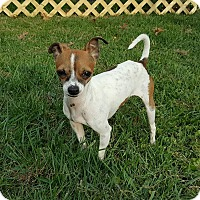 Adopt A Pet :: Tyler - New Oxford, PA