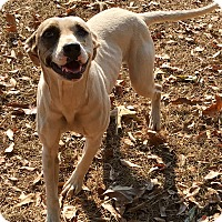 Bulldog Mix Dog for adoption in Allen town, Pennsylvania - Allie