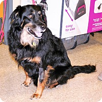 Adopt A Pet :: Indy - Umatilla, FL