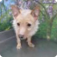 Adopt A Pet :: Dobbie - Las Vegas, NV