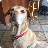 Adopt A Pet :: Bobby - Mebane, NC