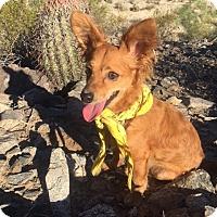 Adopt A Pet :: Gulliver - Phoenix, AZ