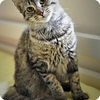 Adopt A Pet :: Tabitha (fluffy) *VIDEO! - New Smyrna Beach, FL