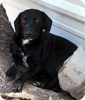 Beagle/Hound (Unknown Type) Mix Dog for adoption in Glenpool, Oklahoma - Shy
