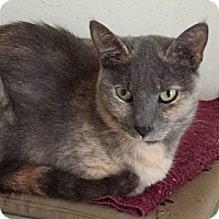 Adopt A Pet :: Mystery - Orillia, ON