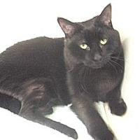 Adopt A Pet :: Jewel - Richmond Hill, ON