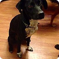 Adopt A Pet :: Pongo - Marietta, GA
