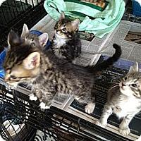 Adopt A Pet :: Randy - Island Park, NY